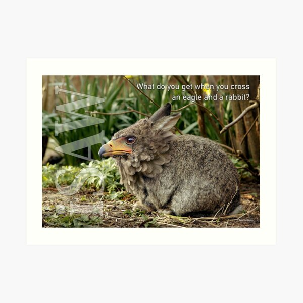What Do You Get When You Cross An Eagle And A Rabbit Art Print