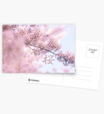 Lovely Light Pink Ethereal Glowing Cherry Blossoms Postcards
