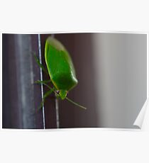 Green bug Poster
