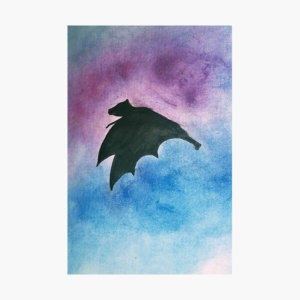 Bat in flight Photographic Print