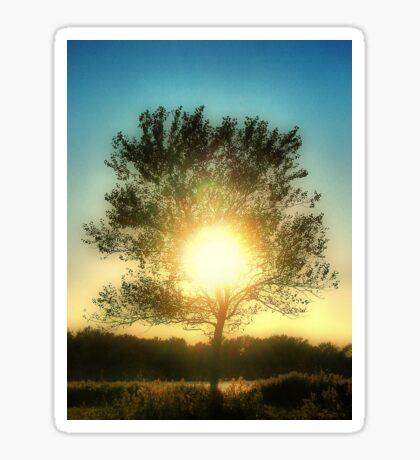 Sun Tree Sticker
