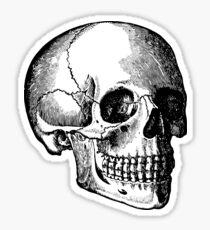 Skull (2) Sticker