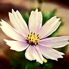 Daisy Painting by Helmar Designs