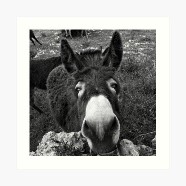 2112 Donkey Lámina artística
