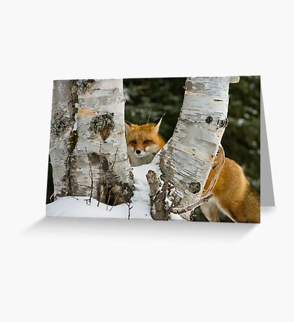 Red Fox Greeting Card