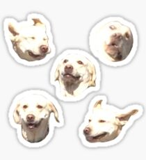 FUNNY DOG STICKER PACK Sticker