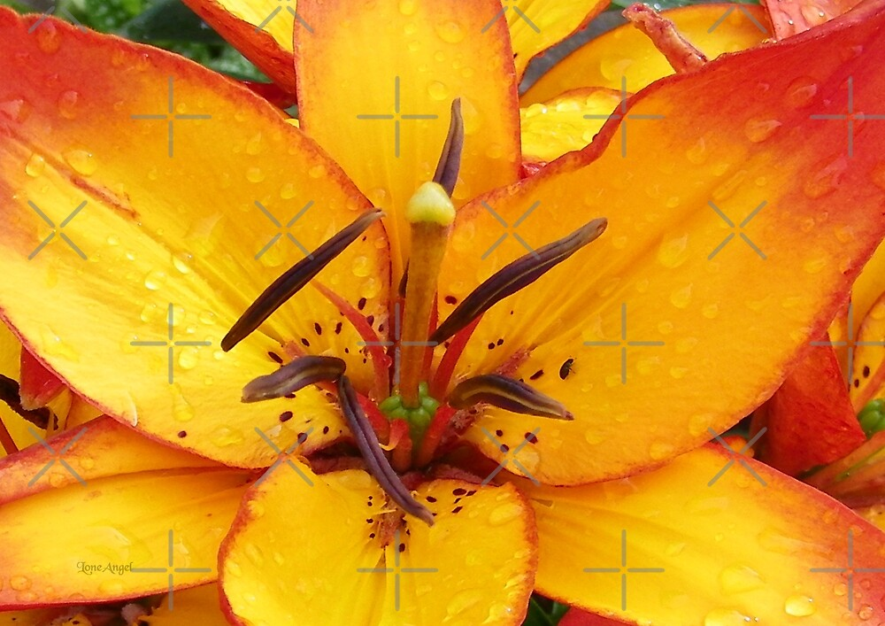 Vibrant Lily by LoneAngel