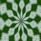 Taraxacum Officinale Seed Abstract Kaleidoscope by taiche