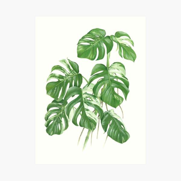 Variegated Monstera Deliciosa -[Indoor Houseplant Love] Art Print