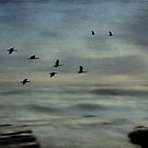 Ibis at Dawn by Sea-Change