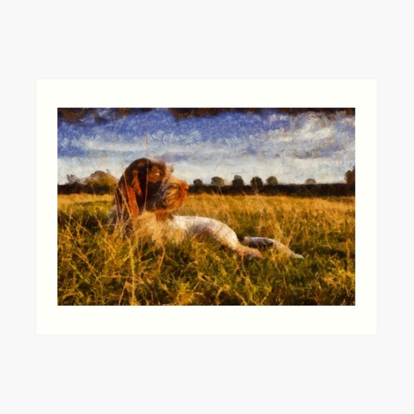 Spinone Puppy Sunset Art Print