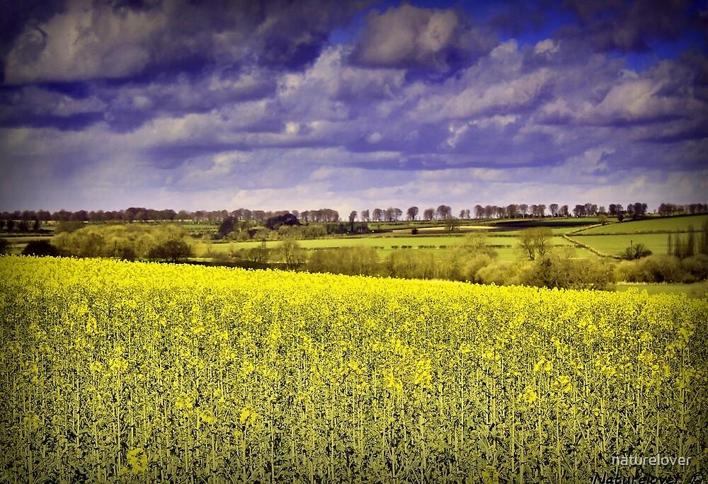 Changing Seasons -Dorset UK by naturelover