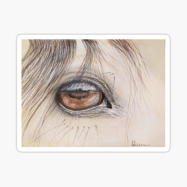 Arabian Stallion eye. Sticker