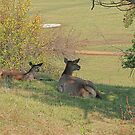 Deer on the lawn by VallaV
