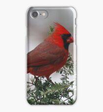 Northern Cardinal iPhone Case/Skin