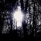 winter sunshine  by Essexbeginner