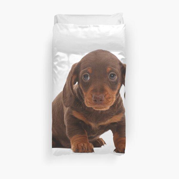 Chocolate Dachshund Puppy Duvet Cover