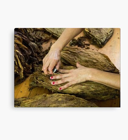 Tobacco Worker's Hands Canvas Print
