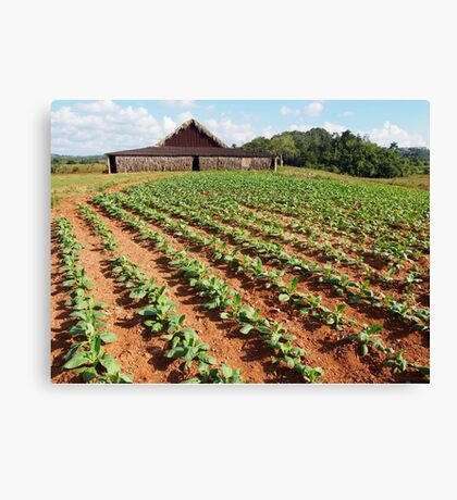 Viñales Tobacco Farm Canvas Print