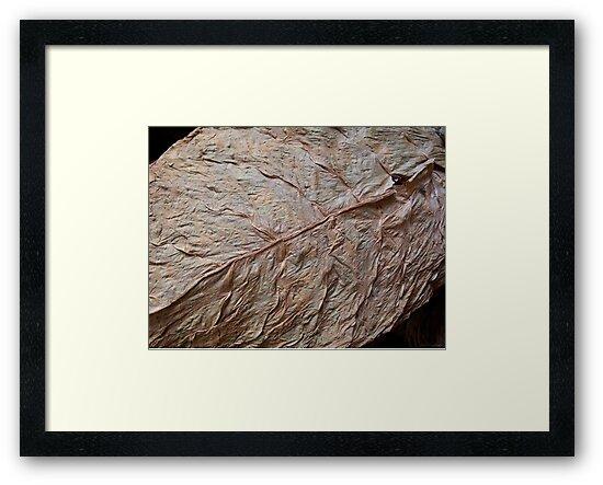 Detail, Tobacco Leaf by ponycargirl
