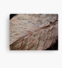 Detail, Tobacco Leaf Canvas Print