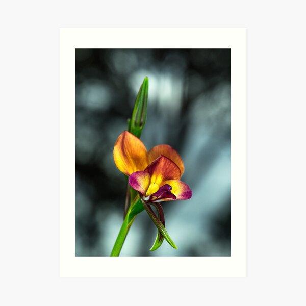 Darling Range Donkey Orchid Art Print