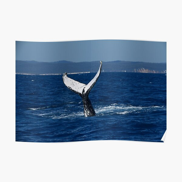 A Whale of A Tail Poster