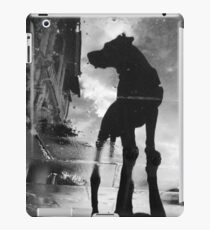 My #dog filby reflected in a puddle today taken on my #galaxynexus iPad Case/Skin