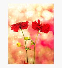 Scarlet Red. Photographic Print