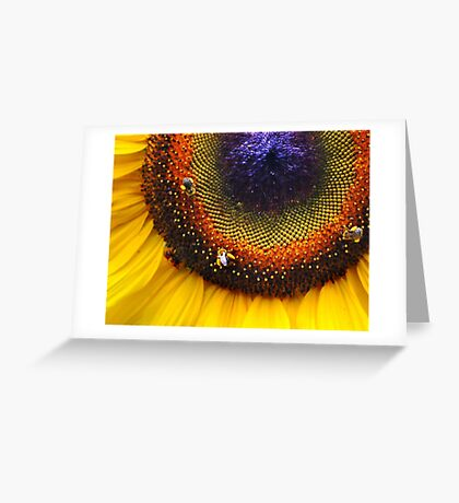 Sunflower, Seeds & Bees Greeting Card