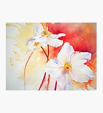 White Windflowers Photographic Print