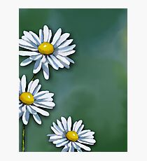 Three Daisies on Green Background, Art, Illustration Photographic Print