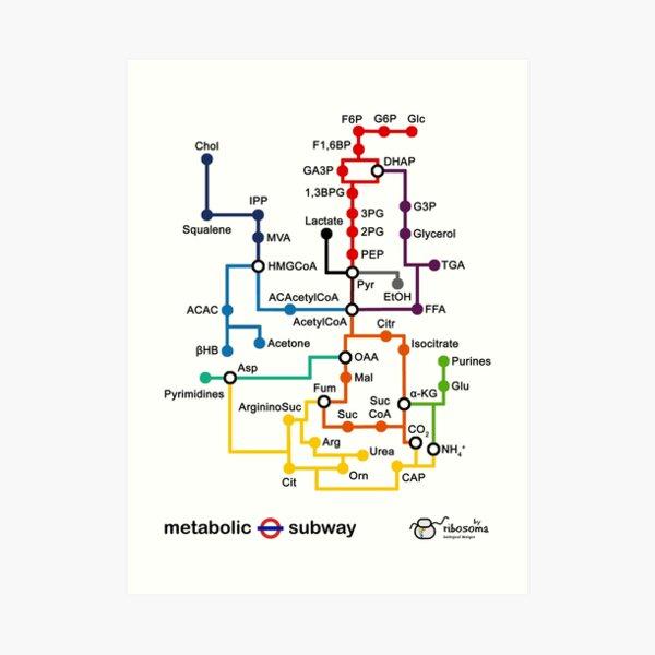 Metabolic subway Art Print