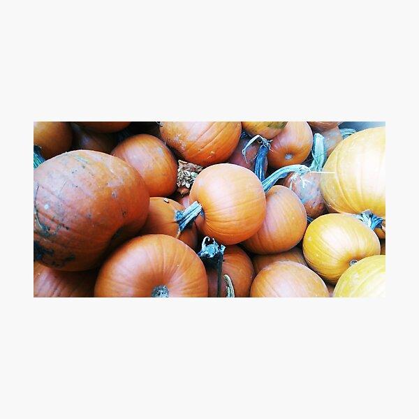 Pie Pumpkins, Autumn Orange, Nature Photography by Courtney Hatcher Photographic Print