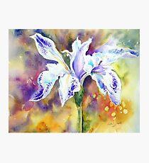 Pond Iris Photographic Print