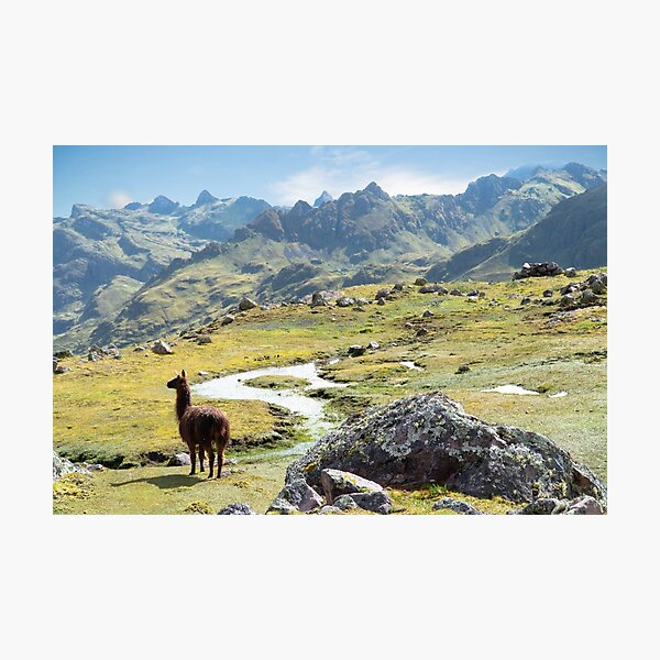 Llama Wilderness of the Andes Mountains Photographic Print