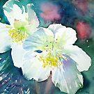 White Hellebore by Ruth S Harris