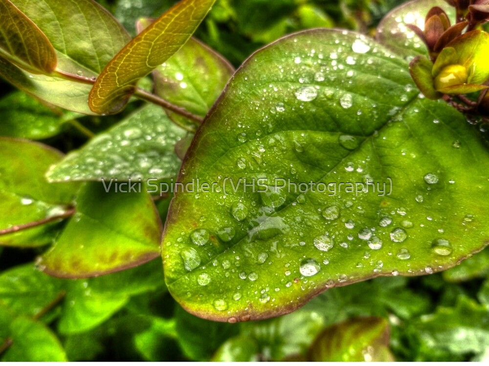 Green Raindrops by Vicki Spindler (VHS Photography)