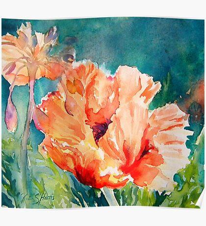 Poppies and Allium Poster