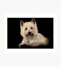 Archie, West Highland Terrier Art Print