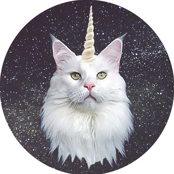 Quot Unicorn Cat Unicat Quot Stickers By Ohmonday Redbubble