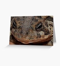 Southern Toad - Anaxyrus Terrestris Greeting Card