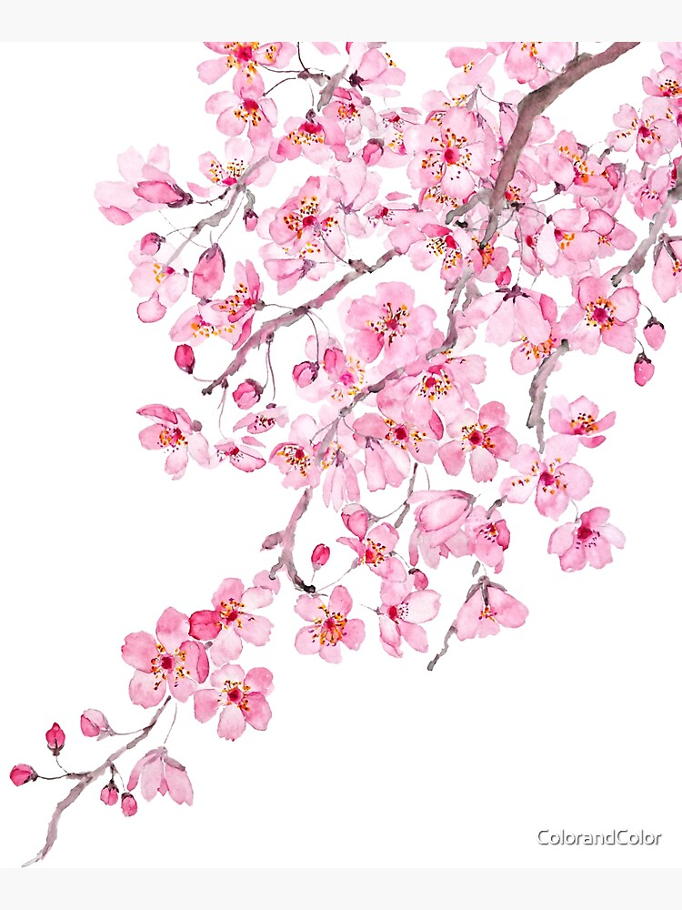 pink cherry blossom watercolor 2020 by ColorandColor