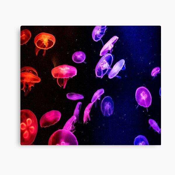 beautiful  jellyfish  Canvas Print