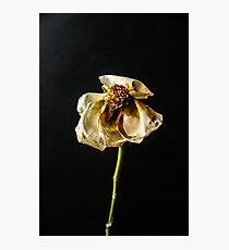 Decayed Flower Photographic Print
