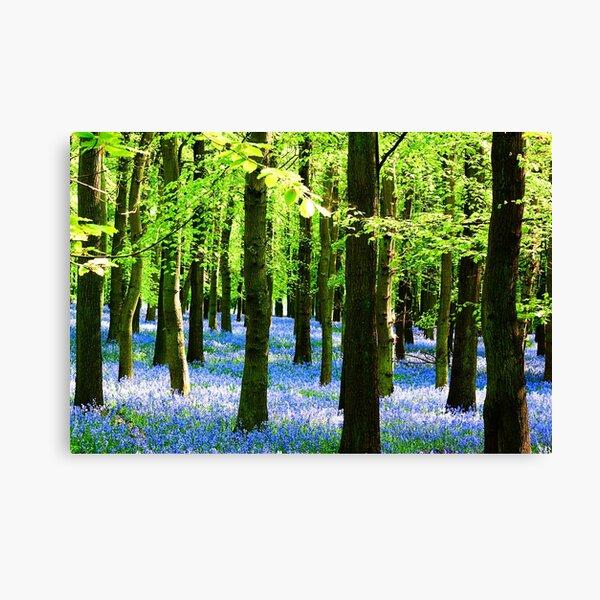 Bluebell Carpet Canvas Print