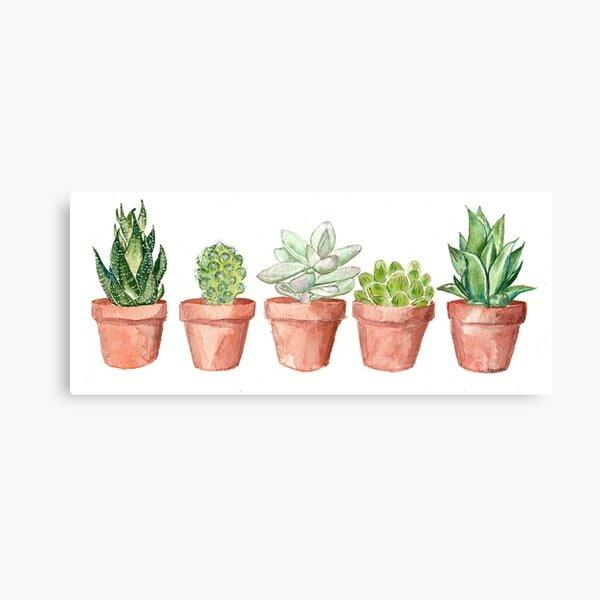 Tiny Succulents in Tiny Pots Canvas Print