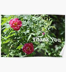 Roses Thank You Card Poster