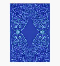 Blue Owl Mirror Photographic Print
