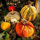 Pumpkins by Colin Metcalf